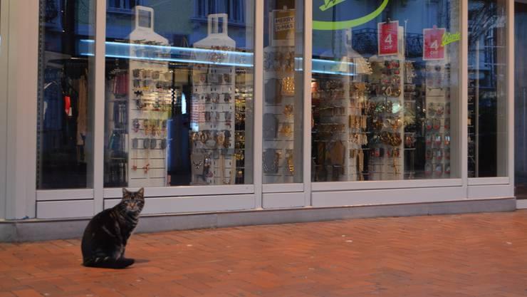 Kater Coco wartet oft vor dem Laden Chicorée auf Streicheleinheiten.