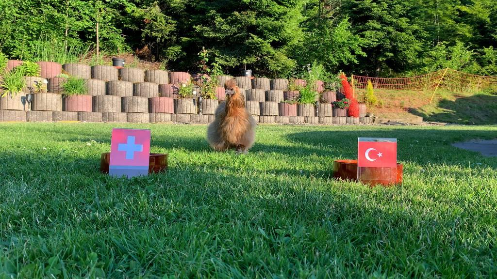 Was tippt Orakel-Henne Hannelori für das Spiel Schweiz-Türkei?