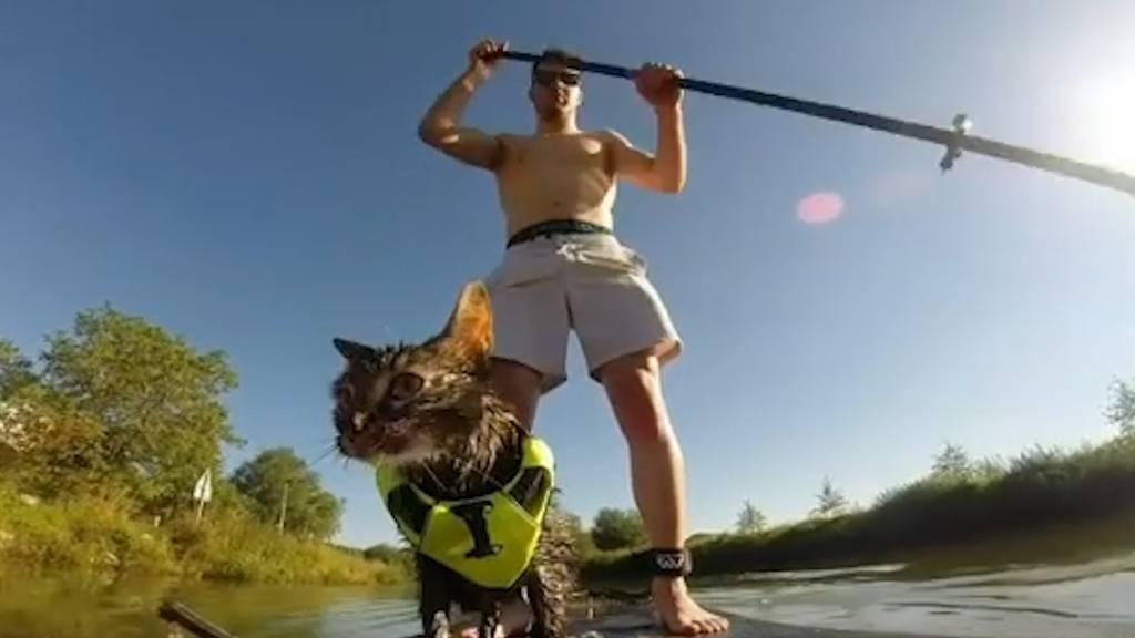 Skifahren, biken, wandern: Diese Katze ist tierisch sportlich!