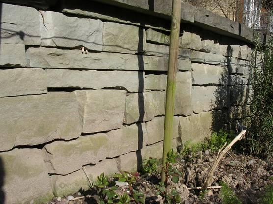 Trockensteinmauer - Eldorado für Insekten, Spinnen, Schnecken