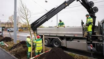219 neue Bäume pflanzt die Stadtgärtnerei in den nächsten Monaten.