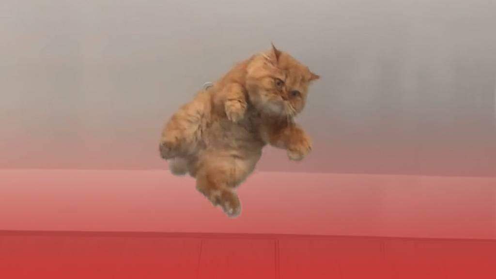 Ups, da fliegt ja eine Katze durchs Zimmer