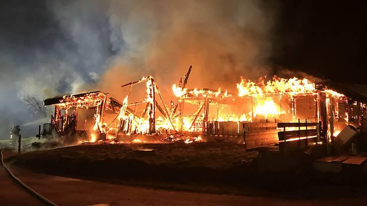 Beim Brand eines Stalls in Herdern TG starben in der Nacht auf Dienstag 160 Schweine.