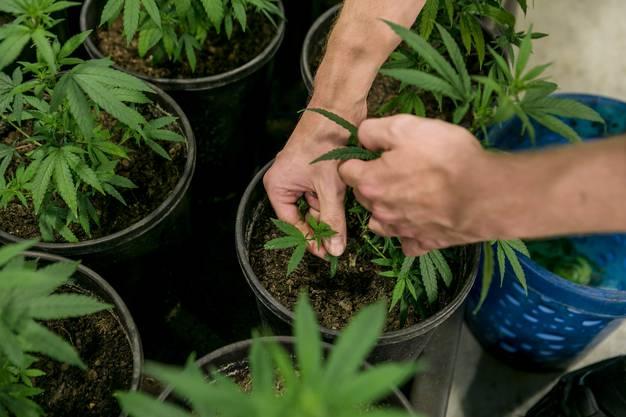 Kunden bezahlen im Voraus für ihre eigene Pflanze und erhalten nach der Ernte ihren Ertrag.