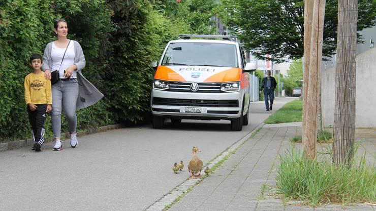 Die Wettinger Entenfamilie wird von der Polizei eskortiert.
