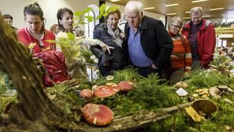 1. nationale Pilzausstellung in Wangen an der Aare