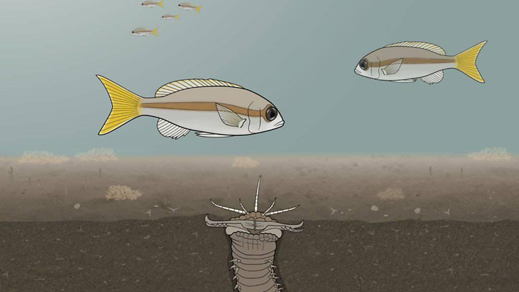 Beutefische mobben den Killerwurm.