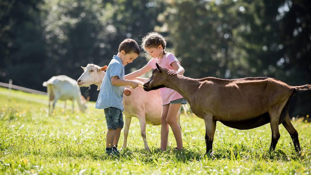 Kinder können Ziegen hautnah erleben
