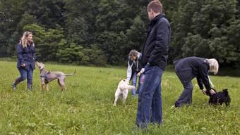Keine Hundekurs-Pflicht mehr im Aargau: So will es der Regierungsrat. (Archiv)