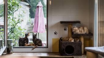 Vierbeiner, die während der Sommerferien in Tierheimen residierten, hatten dieses Jahr deutlich weniger Spielgspändli.