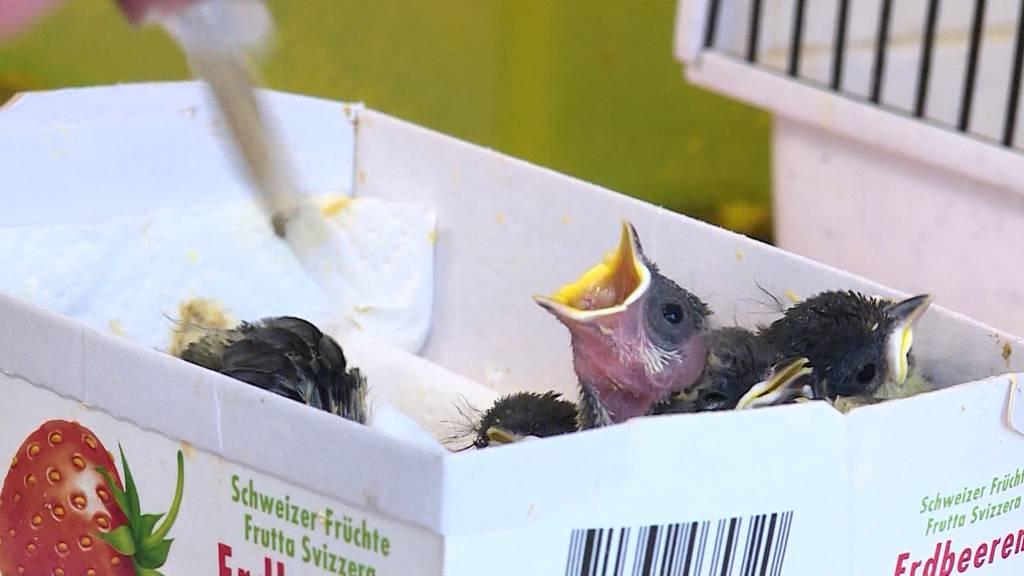 Vogel-Pflege / Naturheilmittel für Vierbeiner