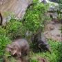 In Thailand ertranken elf Elefanten in einem Wasserfall, die einem Jungtier zu Hilfe kommen wollten. Zwei Elefanten wurden gerettet. Sie konnten den Abhang zurück in den Wald hochklettern, nachdem ihnen Wildhüter energiereiche Nahrung zugeworfen hatten. Bild vom 5. Oktober)