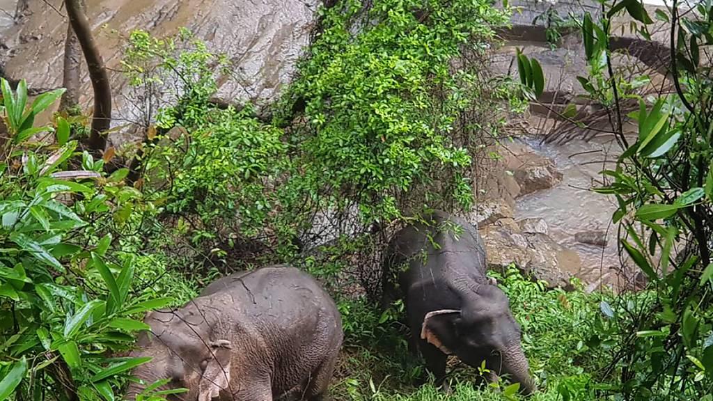 Elf Elefanten in thailändischem Nationalpark in Wasserfall gestürzt