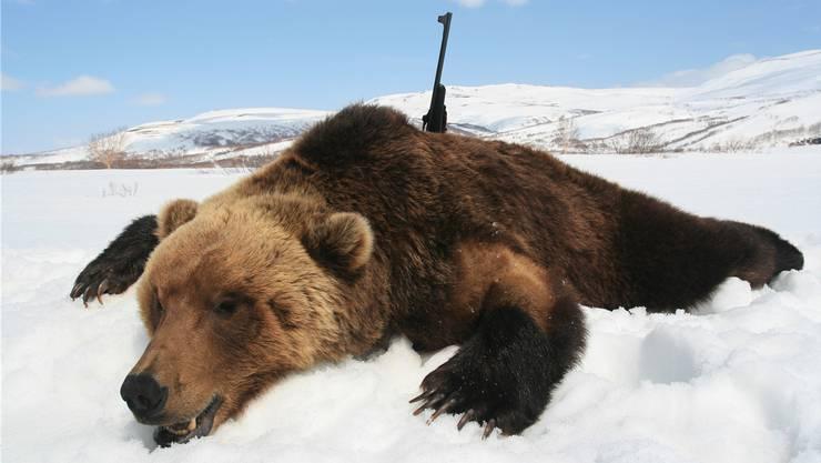 Beziehungspflege nach russischer Art: Man geht zusammen Bären jagen. Mittendrin: Ein Schweizer Ermittler.
