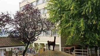 Das Lama hat den Überblick: Die Tiere bringen Abwechslung in den Alltag der «Sonnenberg»-Bewohner.