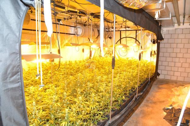 Die Hanfpflanzen wurden in mehreren Räumen des Untergeschosses gefunden.
