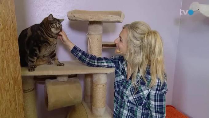 Wildvogelstation / Kitten kommt ins Haus