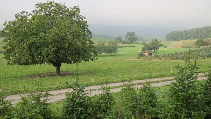 Noch ist die Reservezone Wissächer, Gjuch und Rohracher unberührt.