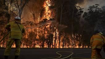 Wegen eines versehentlich ausgelösten Buschbrands mussten in der Region bei Melbourne mehrere Häuser geräumt werden. (Symbolbild)