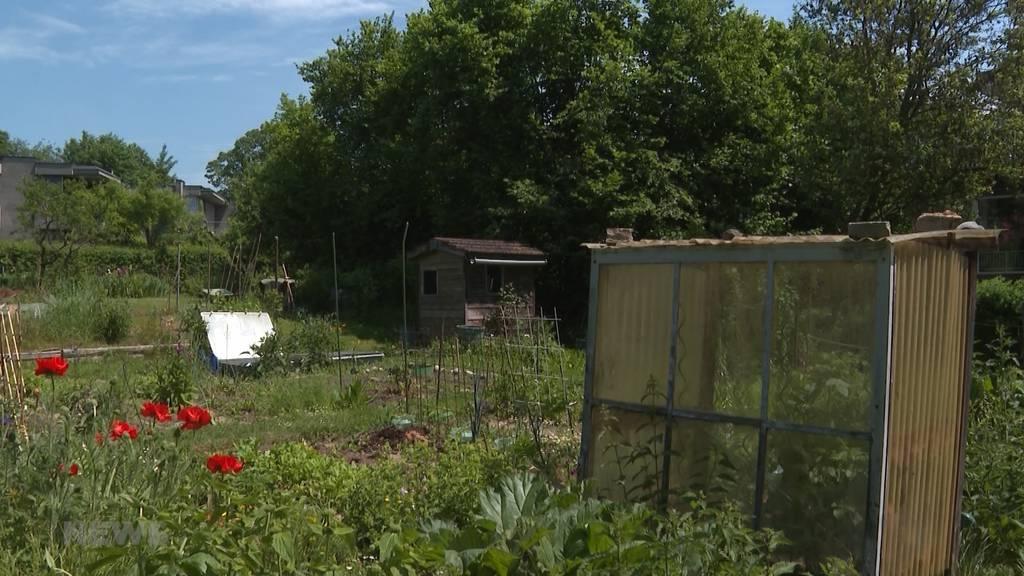 Bauprojekt statt Schrebergärten: Grosse Aufregung in Muri geht weiter