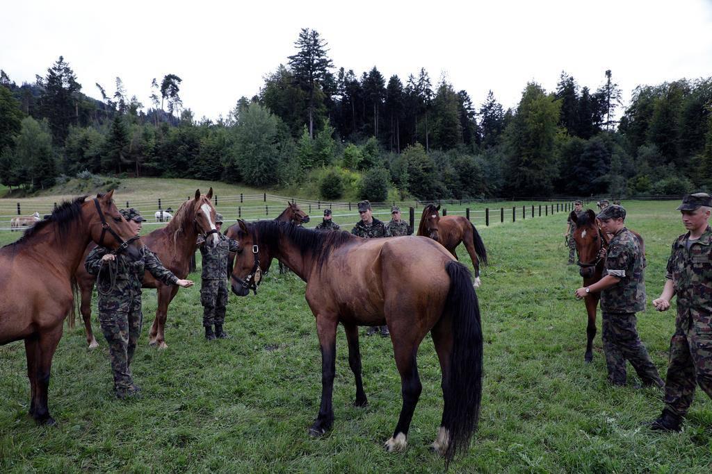 Pferde von U.K. in Schönbühl