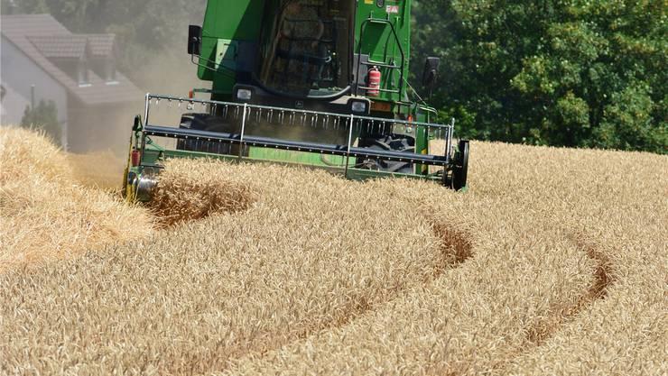 Betriebe, die weniger Hektare besitzen, erhalten auch weniger Direktzahlungen.