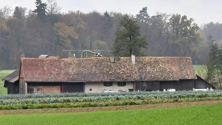 In den «Todesstall» von Boningen, wo Mitte dieses Jahres 16 Rinder kläglich verendeten, ziehen wieder Tiere ein.