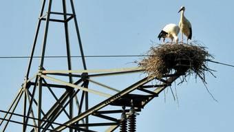 Ein Storchennest auf einem Strommasten ist schuld an einem Stromunterbruch in der Region Möhlin.