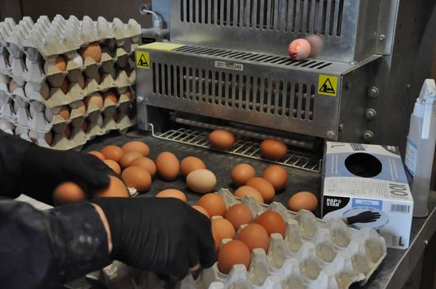 Per Förderband werden die Eier aus dem Stall geholt