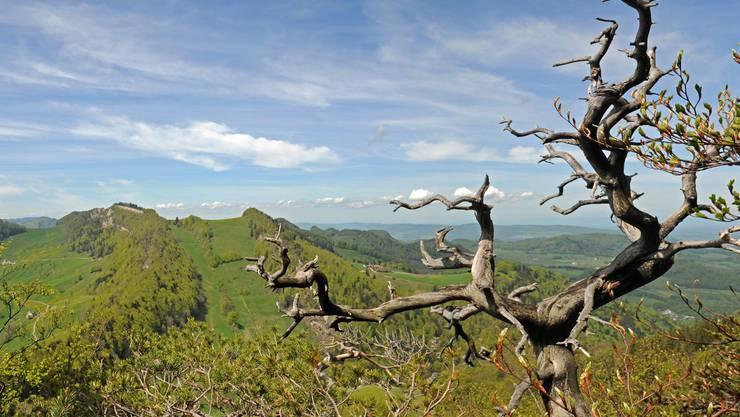 Das Schutzgebiet Belchen-Passwang von seiner schönsten Seite: Blick vom Chellenchöpfli in Richtung Vogelberg und Passwang. Franz Schweizer