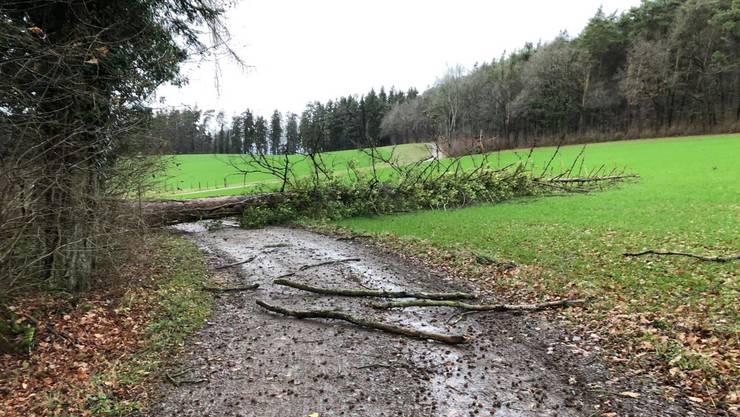 Umgestürzte Bäume gabs nicht nur am Waldrand. Ort in der Schweiz unbekannt.