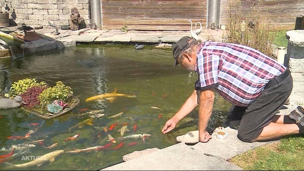 Nachzug Fischsterben: Todesursache ist bekannt