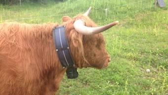 Das GPS sieht einer normalen Kuhglocke täuschend ähnlich. (Bild: Natur Konkret)