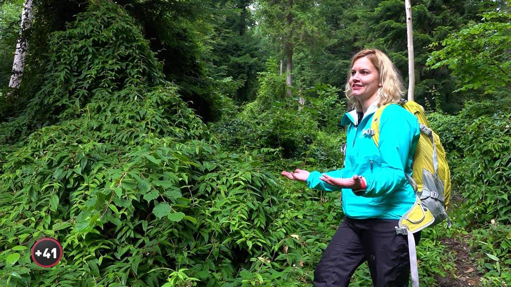 Waldmenschen: Kampf gegen Exoten