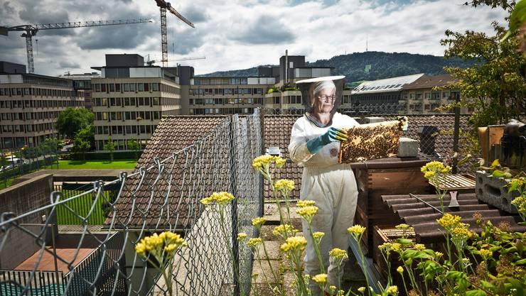 «Ich wollte ein Stück Natur in die Stadt holen»: Imkerin Beatrice Meyer in ihrem Bienen-Paradies im Zürcher Quartier Aussersihl. Annika Buetschi