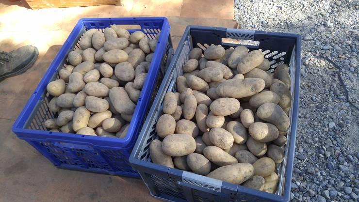 Für die Kartoffeln konnten Abnehmer gefunden werden.