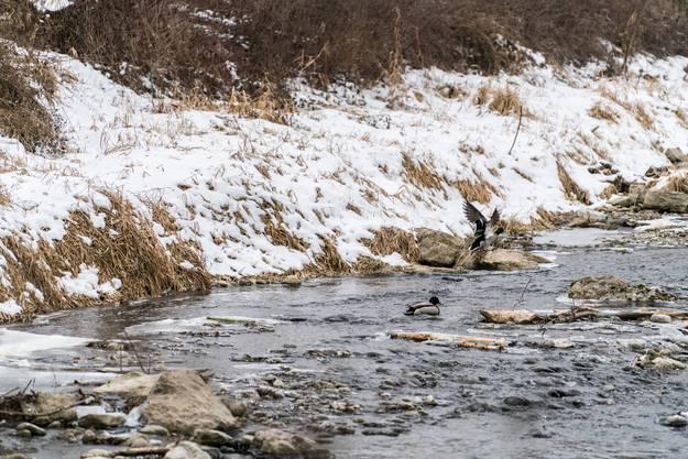 Der Winter 2017 ist auf gutem Weg, einer der kältesten Winter seit dreissig Jahren zu werden. Fotografiert in Aarau. Aufgenommen im Bild ist unter anderem die Aare.