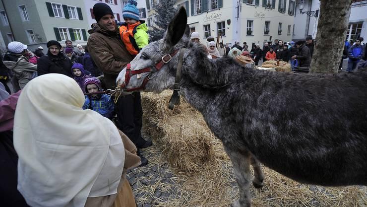 Zwei der Esel, die in den letzten Jahren mitgemacht haben, wurden verkauft. Jetzt wurden neue gesucht.