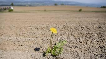 In der Schweiz herrscht gesellschaftliche und klimatische Trockenheit, schreibt Hans Fahrländer.