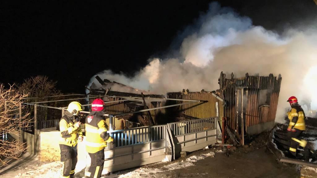 Stall brennt ab – 200 Schweine sterben in den Flammen