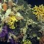 Mit Tauchrobotern konnten Ökosysteme in einer Wassertiefe von rund 3'400 Metern erforscht werden.