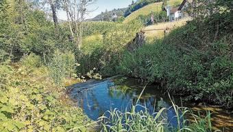 Hier stand das Wehr und wurde das Wasser abgeleitet.