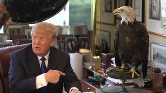 In diesem Video macht der Adler definitiv die bessere Figur als Donald Trump.