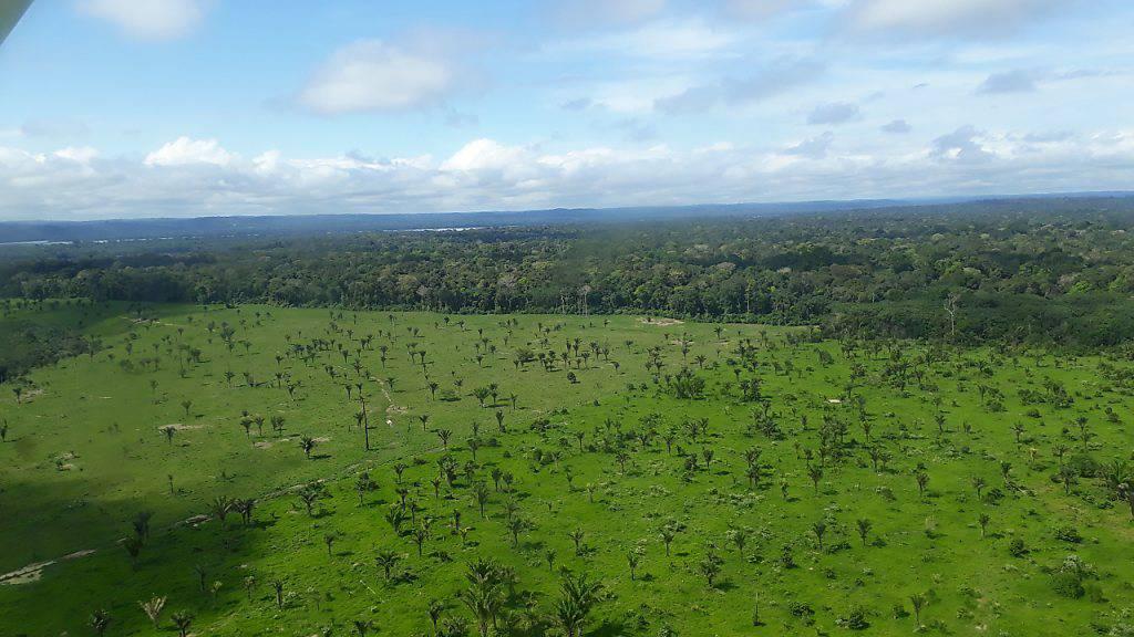 Luftblick auf abgeholzte Fläche des Amazonas. Die Zerstörung im brasilianischen Amazonas-Gebiet nimmt im Schatten der Covid-19-Pandemie dramatisch zu. Foto: Martina Farmbauer/dpa