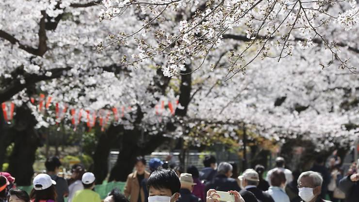 Das Corona-Virus trübt die Wirtschaftsstimmung in Japan massiv ein. Sie ist so tief wie zuletzt nach der Tsunami-Katastrophe. Im Bild: Besucher mit Mundschutz unter blühenden Kirschbäumen im Ueno Park in Tokio.