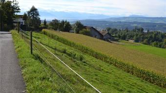 Der Gemeinderat hat das Geschäft «Neueinzonung im Rebberg-Gebiet» aus dem Programm der Gemeindeversammlung gekippt.sl