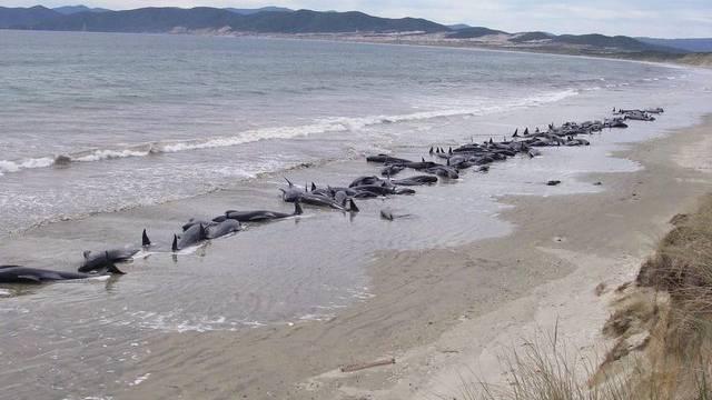 Wale liegen an einem neuseeländischen Strand (Archiv)
