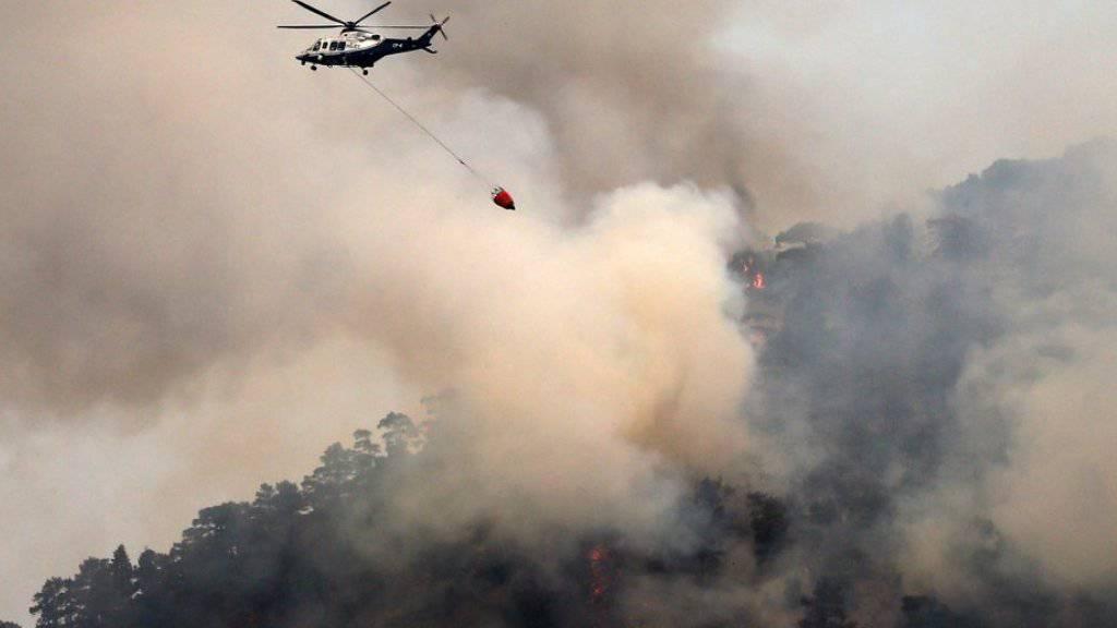 Löschhelikopter im Einsatz am Berg Troodos.