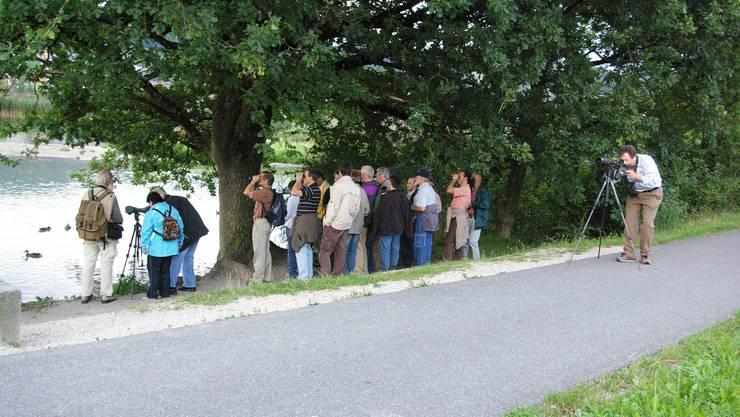 Für Vogelkundler (Ornithologen) ist der Klingnauer Stausee ist Begriff – man trifft sie fast täglich hier an. (Archiv)