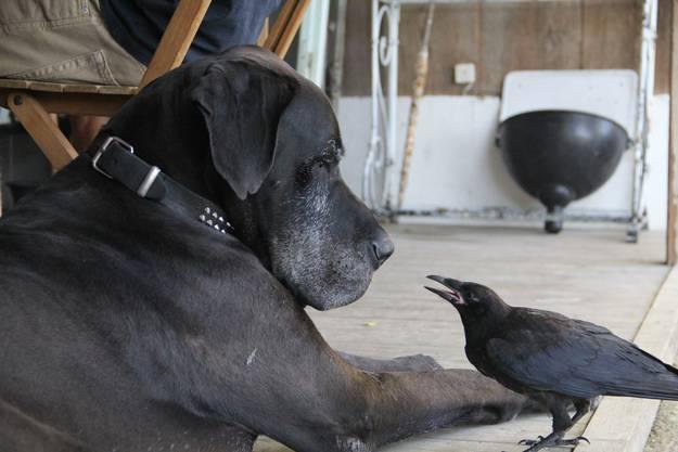 Hund und Rabe: Was die beiden sich wohl zu sagen haben?